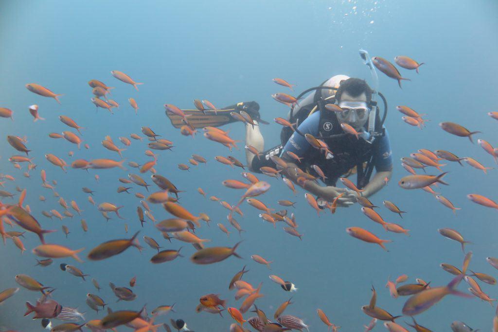 האי מאפיה