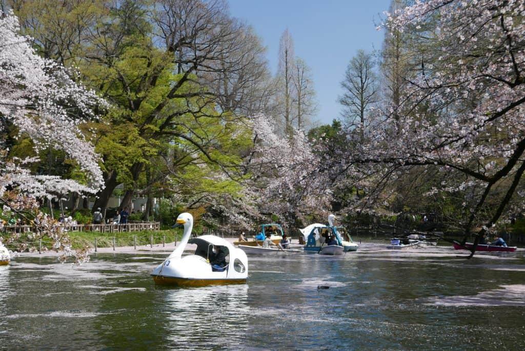 פארק אינוקשירה - Inokashira Park