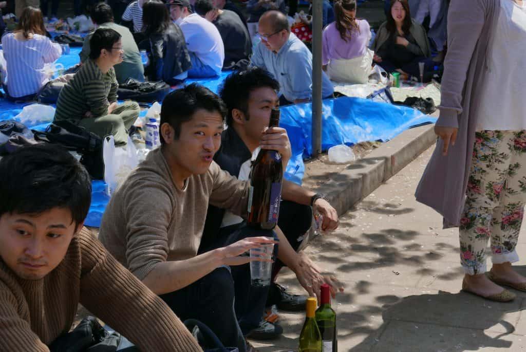 שתייה ביפן - פריחת הדובדבן